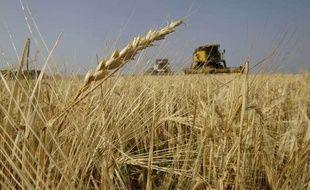 Un champs de blé au sud de Moscou, en Russie, en août 2010.