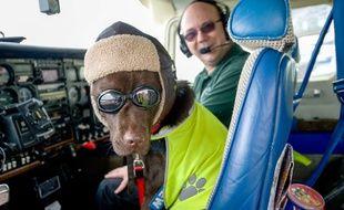 Un chien a obtenu un brevet de pilote en Grande-Bretagne.