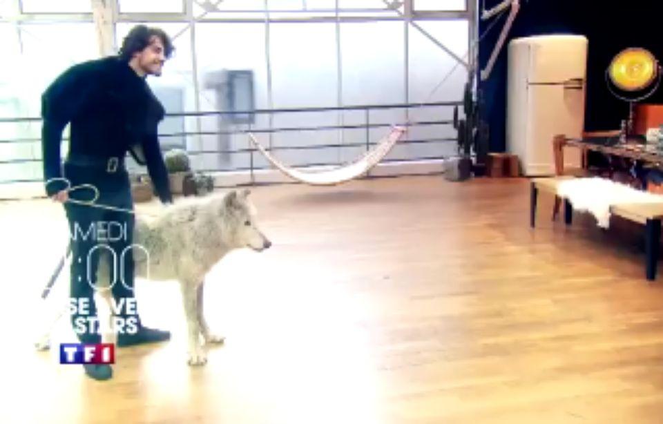 VIDEO. «DALS»: Une séquence avec un loup qui a choqué les internautes 960x614_danseur-anthony-colette-loup-mako