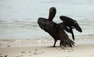 Un pélican touché par la marée noire dans le golfe du Mexique, le 2juillet 2010.