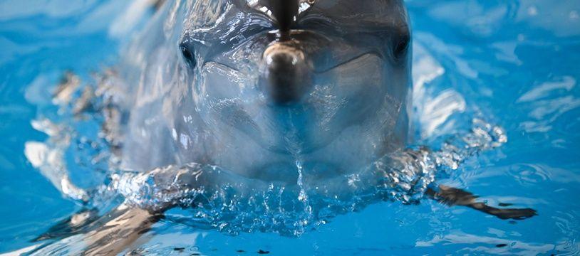 Un dauphin. (Illustration)