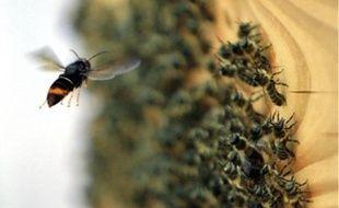 Les interventions pour détruire les nids d'hyménoptères ont plus que doublé entre2014 et2018.