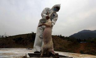 Des milliers de cochons morts ont été repêchés dans un fleuve de Shanghai, en mars 2013.