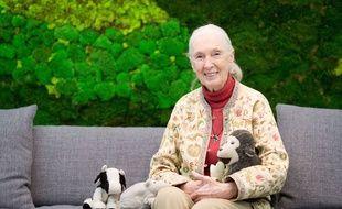 Jane Goodall donnera une conférence à Bordeaux, ce samedi.