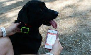 Une femme tient son smartphone près de son chien muni d'un collier GPS, à La Celle-Saint-Cloud (Yvelines), le 1er juillet 2015