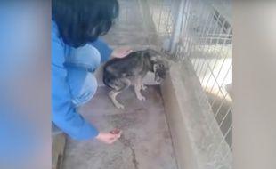 Capture de la vidéo postée par Amo a los Animales