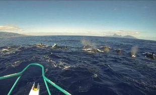 Une douzaine d'orques ont nagé autour d'un bateau de pêche pendant une dizaine de minutes, dimanche au nord de Tahiti, a rapporté un habitant qui a remis à un journaliste de l'AFP un film de la scène qu'il avait tourné