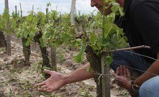 Un viticulteur de Bordeaux dans ses vignes.