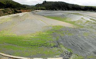 L'hydrogène sulfuré se dégage des algues vertes en décomposition.