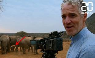 VIDEO. Mais que font ces éléphants ? - Le Rewind (video)