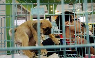 Un chiot adopté lors d'un salon canin à Shangai, en Chine, en septembre 2008.