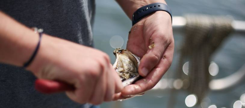 Illustration d'un ostréiculteur ouvrant une huître, ici en Bretagne.