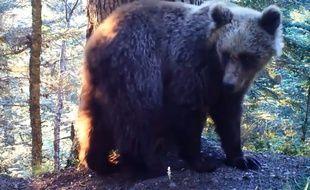 Un ours filmé au cours de l'été 2016 dans les Pyrénées par les caméras automatiques de l'ONCFS.