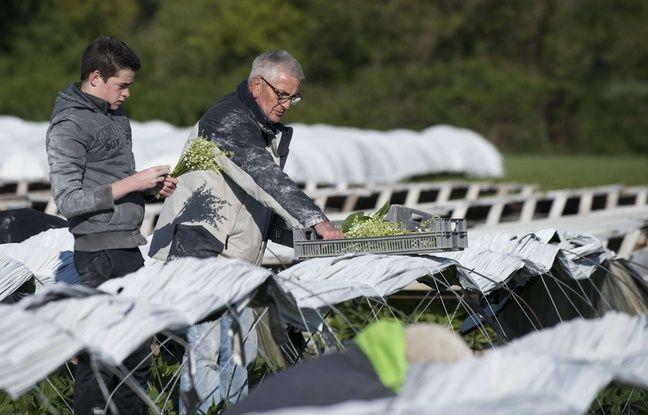 Coronavirus à Nantes: Les producteurs de muguet préparent la cueillette sans savoir ce qu'ils pourront vendre