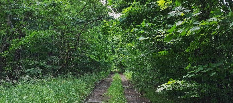 Un chemin en forêt (Illustration)