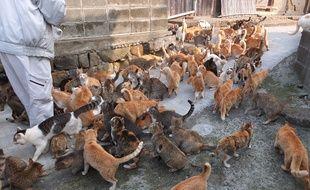Une terre où les chats sont rois ? Voilà un comité d'accueil qui sort de l'ordinaire !
