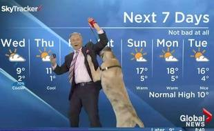 Capture d'écran du présentateur canadien Mike Sobbel, dont la météo a été perturbée par le chien Ripple.