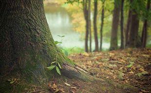 Une forêt (illustration).