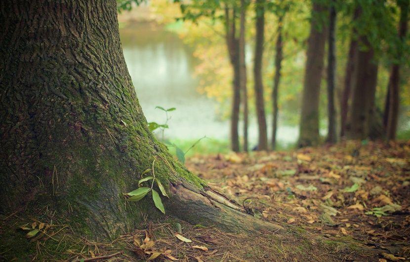 VIDÉO. Canada : Un cri mystérieux enregistré en pleine forêt interroge chercheurs et internautes