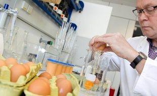 Un technicien examine des oeufs dans un laboratoire à Münster, en Allemagne, le 4 janvier 2011.