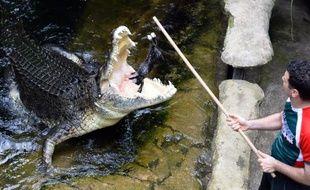 Rex, un crocodile géant de 700 kilos, s'apprête à engloutir un lapin, le 3 mars 2014 dans le zoo de Sydney