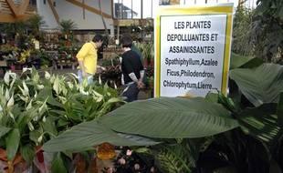 Des plantes purifiantes et dépolluantes d'intérieur sont vendues dans les jardineries.