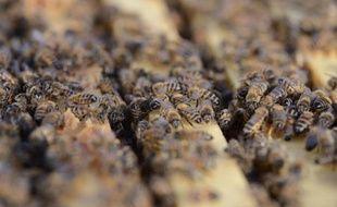 Près de 10% des quelque 2.000 espèces sauvages d'abeilles européennes sont menacées d'extinction, et 5% supplémentaires le seront dans un futur proche si rien n'est fait
