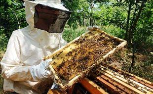 """Trois élues écologistes ont appelé jeudi le gouvernement à autoriser les apiculteurs à utiliser le dioxyde de soufre contre les frelons asiatiques, une technique jugée """"efficace"""" par l'Agence nationale de sécurité sanitaire dans une réponse aux élues"""