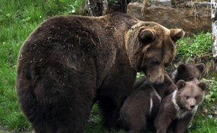 Une ourse et ses petits dans les Pyrénées espagnoles.