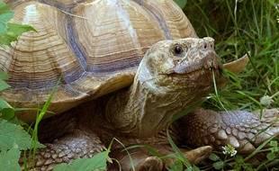 C'est une tortue semblable a elle-ci qui a été retrouvée.