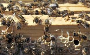 Appel inédit aux dons d'essaims d'abeilles pour aider des apiculteurs de l'Ariège et des Pyrénées Orientales touchés par une hécatombe exceptionnelle l'hiver dernier