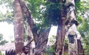 La tribu des Korowai vit dans les arbres pour échapper aux moustiques.