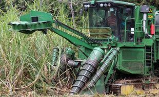 Une plantation de cannes à sucre (illustration).