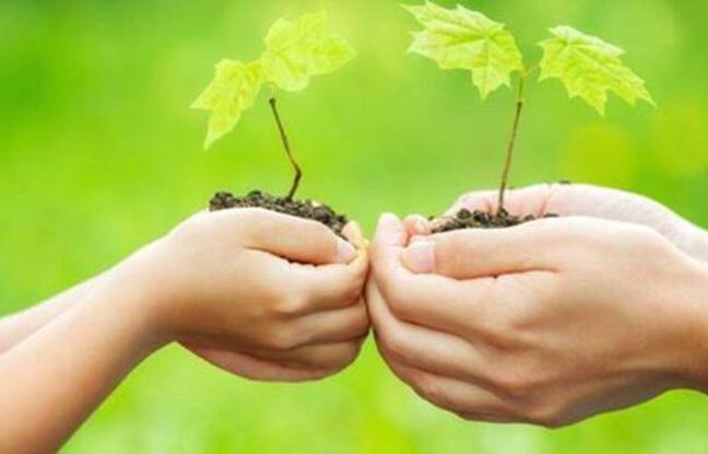 Deux mains faisant office de pot pour de jeunes pousses