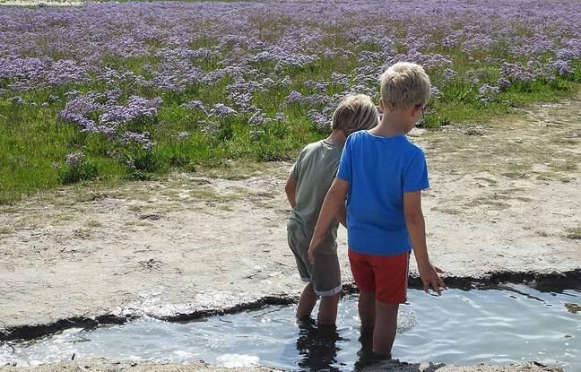 Le parc naturel du Zwin, à la frontière entre la Belgique et les Pays-Bas.
