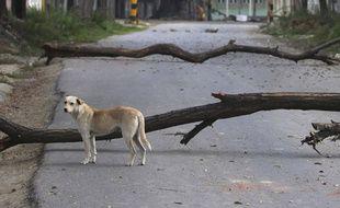 Un chien, en Inde