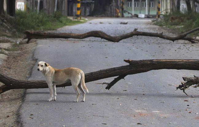 648x415 chien inde