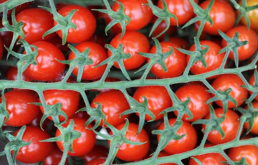 Bretagne : Ses tomates « origine France » venaient de l'étranger, un grossiste lourdement condamné