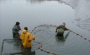 Les pisciculteurs sont inquiets face à la sécheresse.