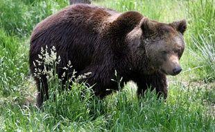 Un ours dans le parc animalier des Angles, le 24 juin 2006.