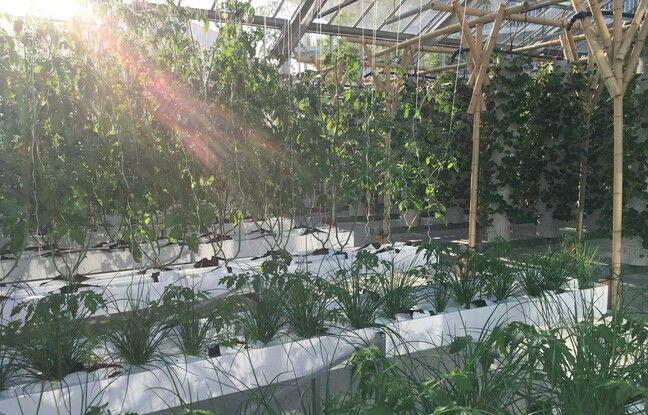 Les légumes sont cultivés en hydroponie, sans pesticides.