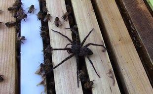 Les abeilles ont terrassé l'araignée.