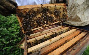 BRAINS, le 04/06/2012 Un apiculteur et une étudiante vétérinaire autour de ruches