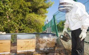 A Menton, entre 30 et 40 ruches seront installées d'ici à la fin de l'année.