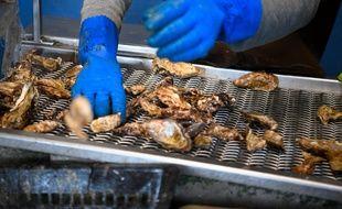 Les huîtres sont très prisées par les cambrioleurs à l'approche des fêtes.