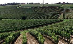 Il va certainement devenir plus difficile de cultiver des vignes dans la région de Bordeaux ou dans la vallée du Rhône d'ici 2050, indique une étude publiée lundi aux Etats-Unis soulignant que la carte des régions productrices au niveau mondial va fortement évoluer.