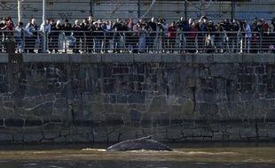 Une petite baleine est apparue lundi 3 août dans les eaux douces du canal de Puerto Madero, à quelques mètres du centre de Buenos Aires