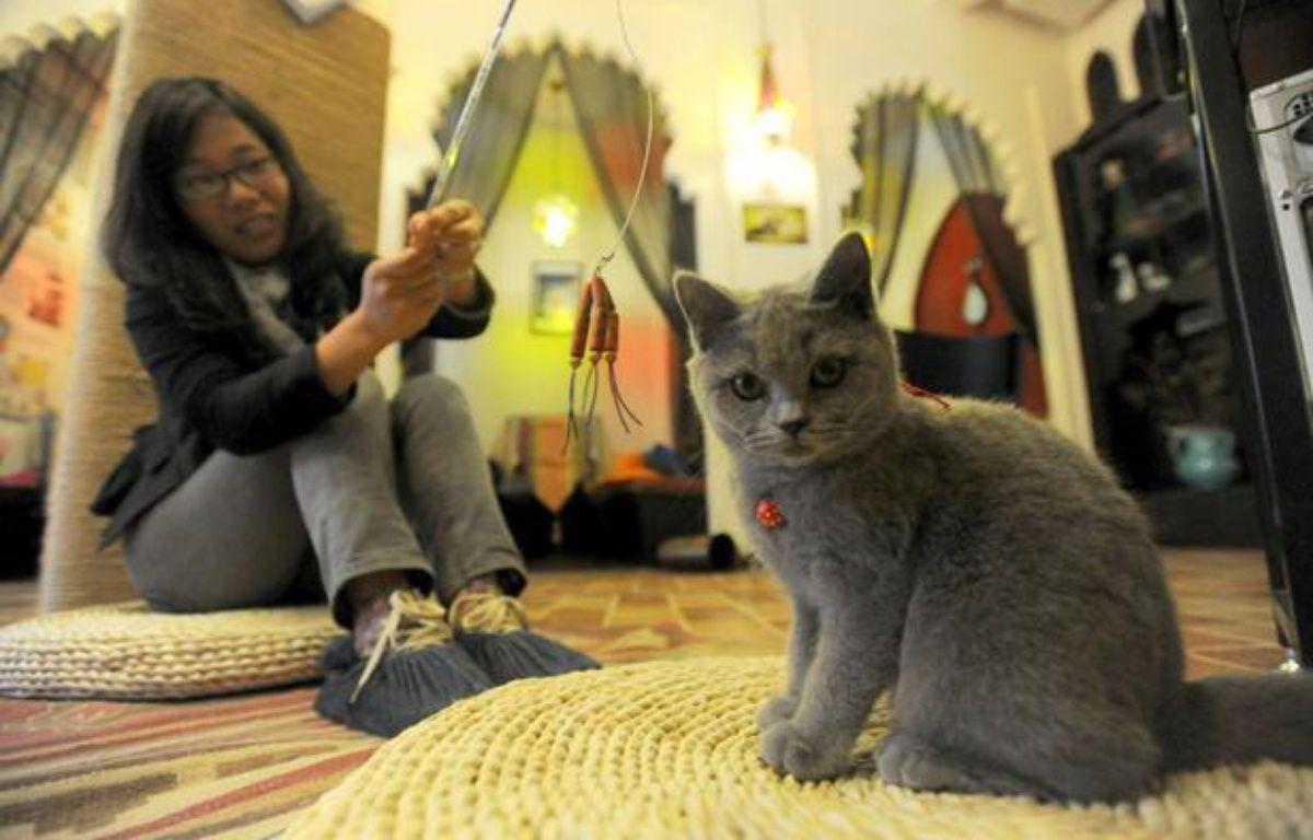 Un bar à chats en Chine. – Quirky China News / Rex/REX/SIPA