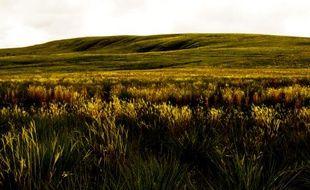 Le «cerrado», la savane brésilienne.