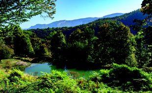 Vercors Sauvage, la réserve de vie sauvage que souhaite créer l'Aspas, fera 490 hectares.